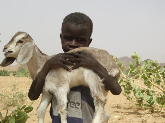 A healthy goat means a healthy child in Darfur