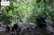 Protecting Chimpanzees