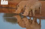 Protecting Rhinos