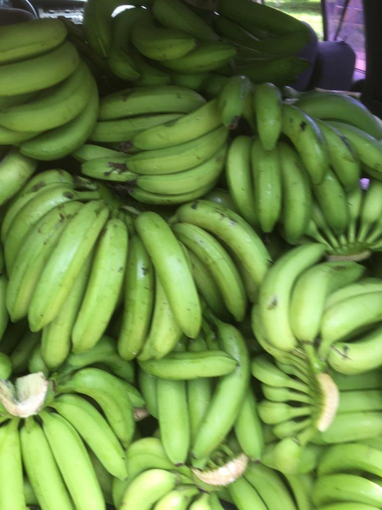 Bananas donated to feed humans & Wildlife