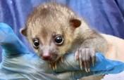 Kids Saving The Rainforest Wildlife Rescue Center