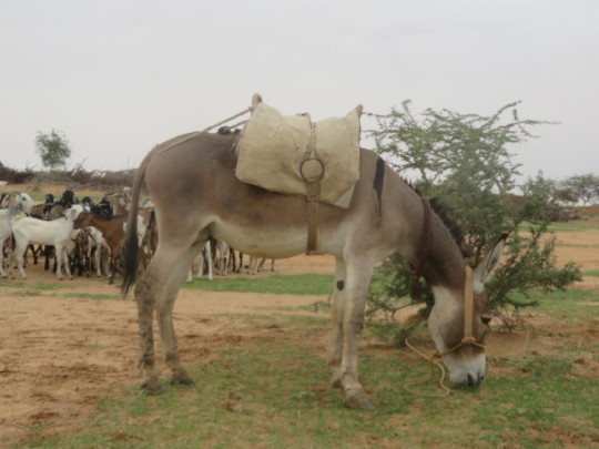 A simple Donkey means more women can be reached