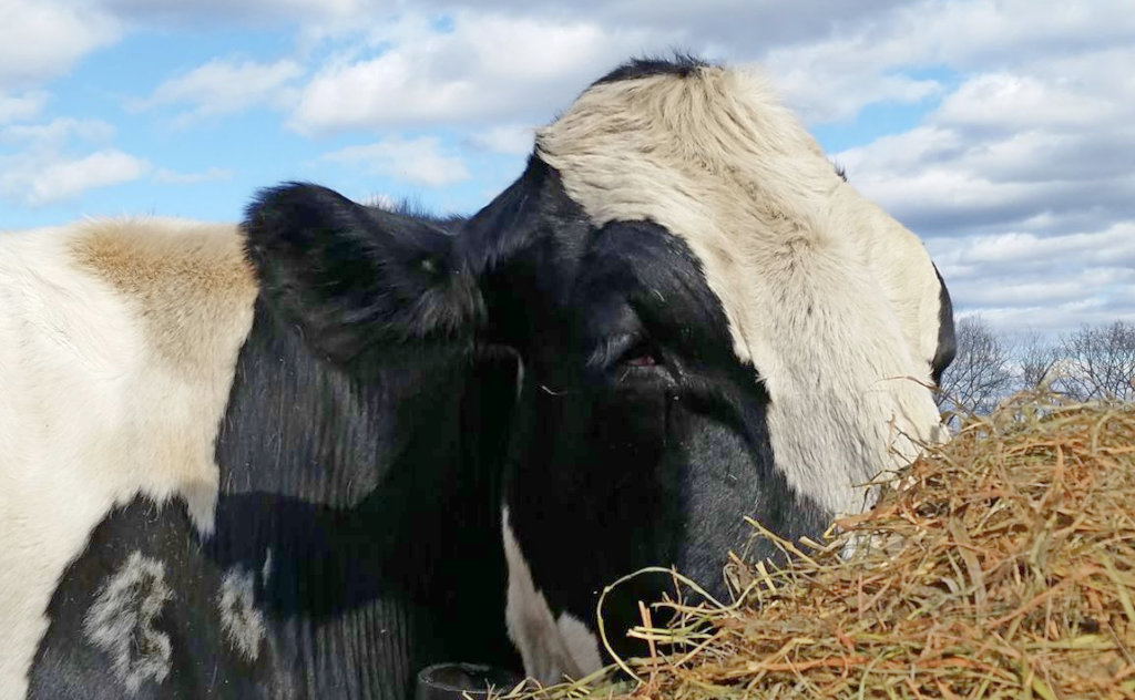 Feed the Change for Farmed Animals