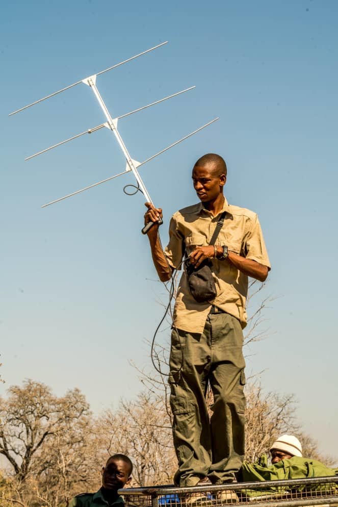ALERT researcher Anele picking up a VHF signal fro