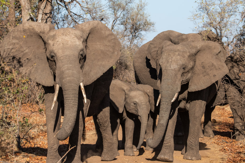 Elephant research in Chizarira, Zimbabwe
