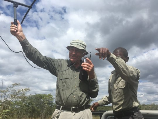 TRacking the colared elephant