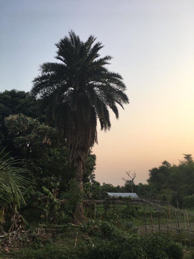 Peer training to switch to organic farming - Nepal