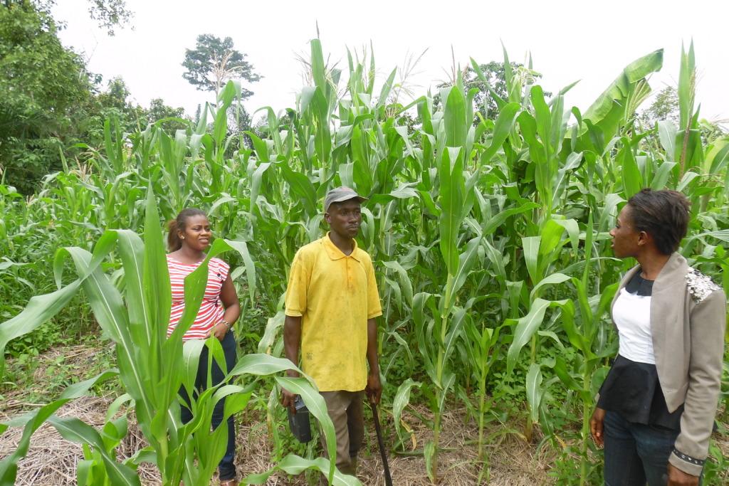 SHI&its farmers monitoring selected farmer
