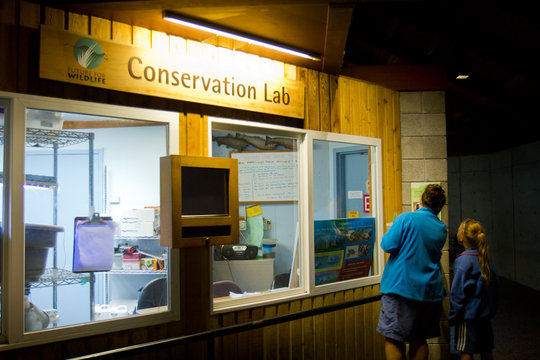 Turtle Conservation Lab