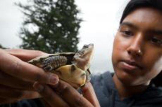 Western Pond Turtle with a teen volunteer