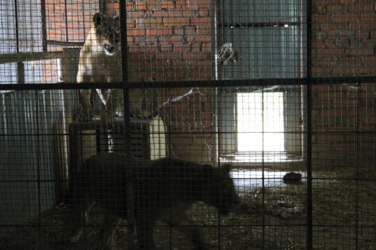DIya and Frieda - Night shelter