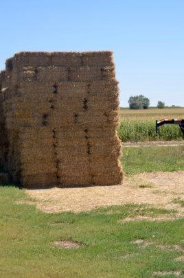 Bales of hay at Cottonwood Farms