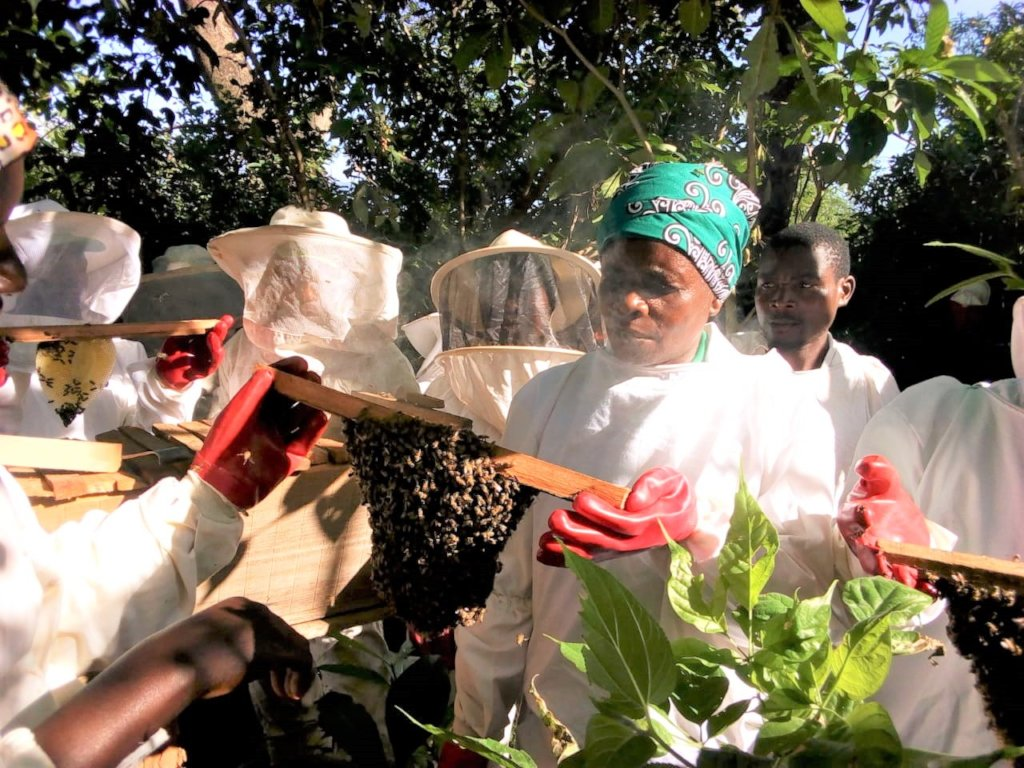 Training beekeepers in Chimanimani