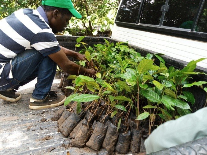 Help 5 communities restore forests in Mozambique