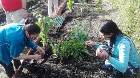 Creation of seedbeds
