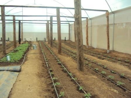 Greenhouse at Mahiga Hope