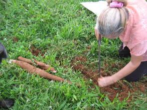Doña Christina, digging Yucca she has grown