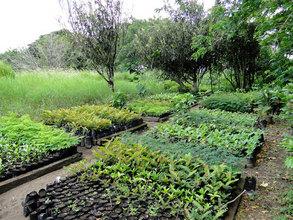 One half of the LRFF seedling nursery replanted