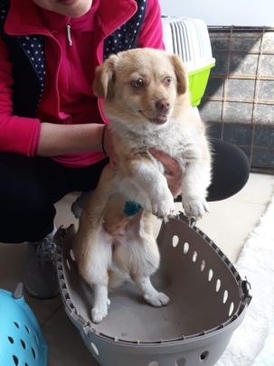 a female dog just castrated