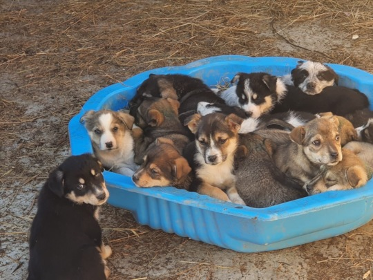 castrations to prohibit such floods of puppies