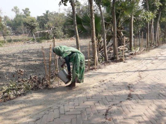 Caring planted mangroves- Balancing Ecology