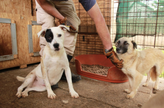 dogs in a kennel to be registered