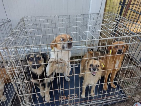 Dogs / puppies dropped in shelter