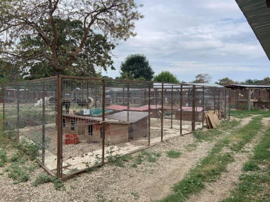 Many kennels need roofs