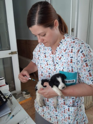 medical care of a puppy