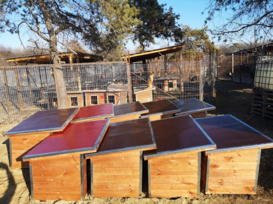 new doghouses for the new kennels