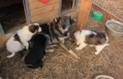 Financial support of the shelter Bucov/Ploiesti
