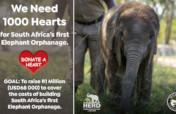 1000 Hearts for SA's first Elephant Orphanage
