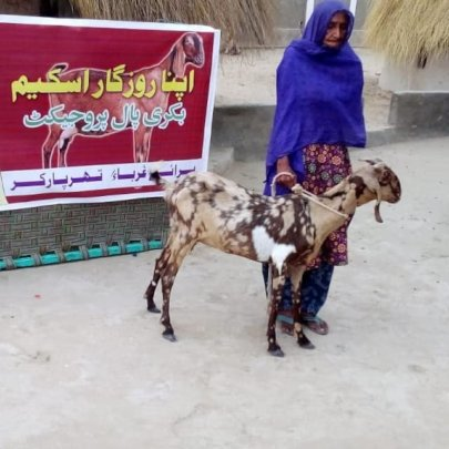 Goat being Handed over to a Poor Women of Thar