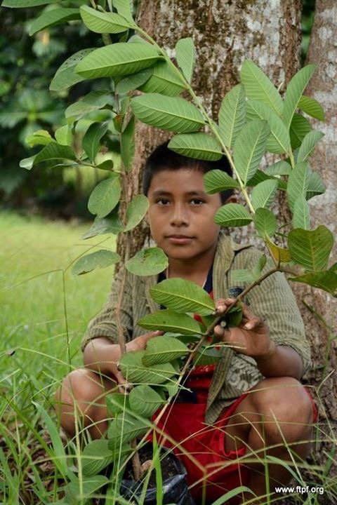 Feed Vulnerable Guatemalan Kids with Fruit Trees!