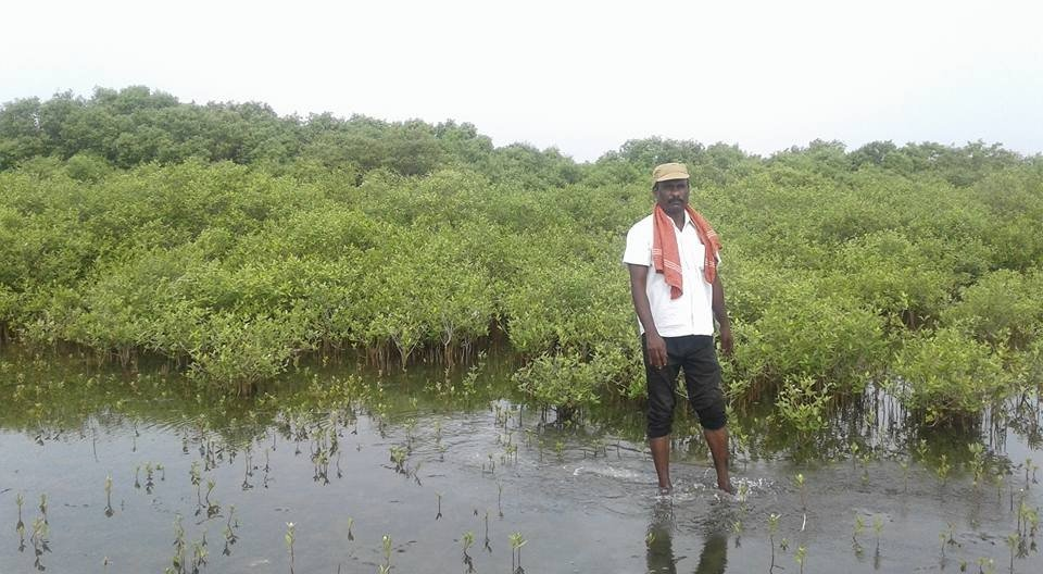 Mangroves conservation and Wed-land promotion
