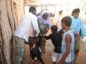 Mentors learning animal husbandry techniques