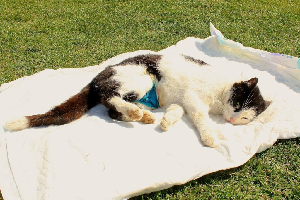 Donate for first shelter for disabled, senior cats