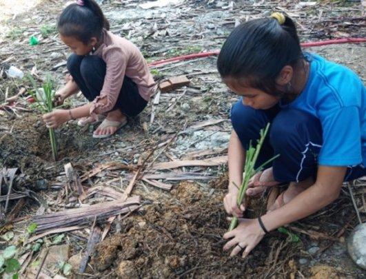 Students planting citronella.