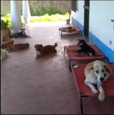 Red de Apoyo canino High beds donation