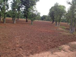 Plowed Farm