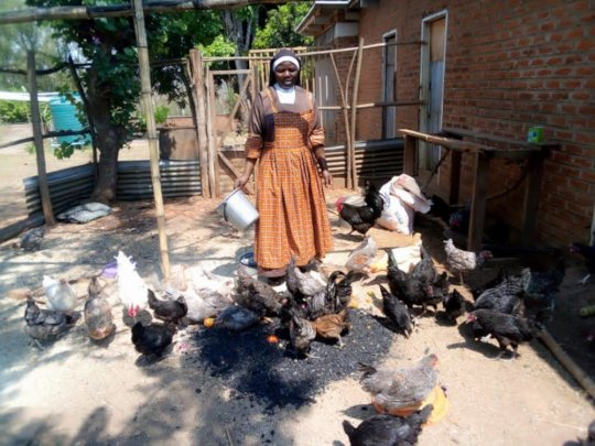 Chickens love biochar