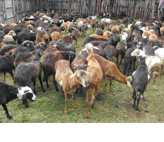 Create Asset for 500 Sidama Villagers