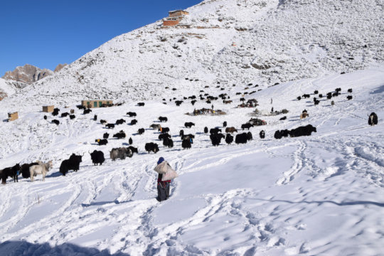 Saldang village during winter