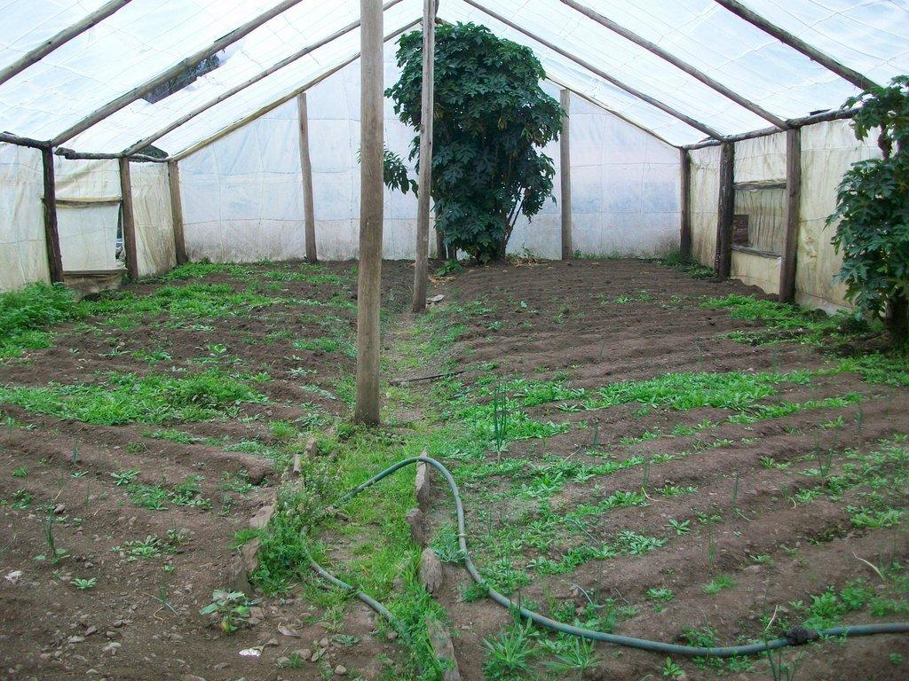 Improving Nutrition for Children in Peru