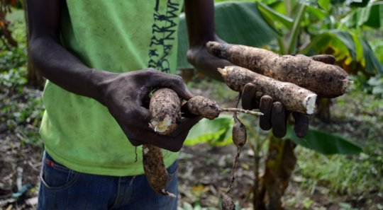 Haitian farmers are finally seeing remedy results