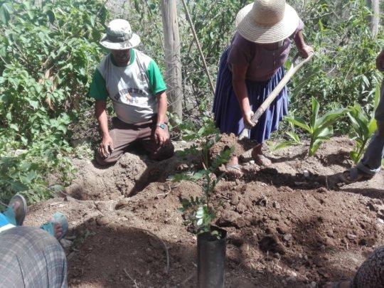 planting Tara seedlings