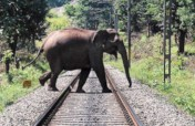 The Kerala Corridor Project 4 Wild Asian Elephants