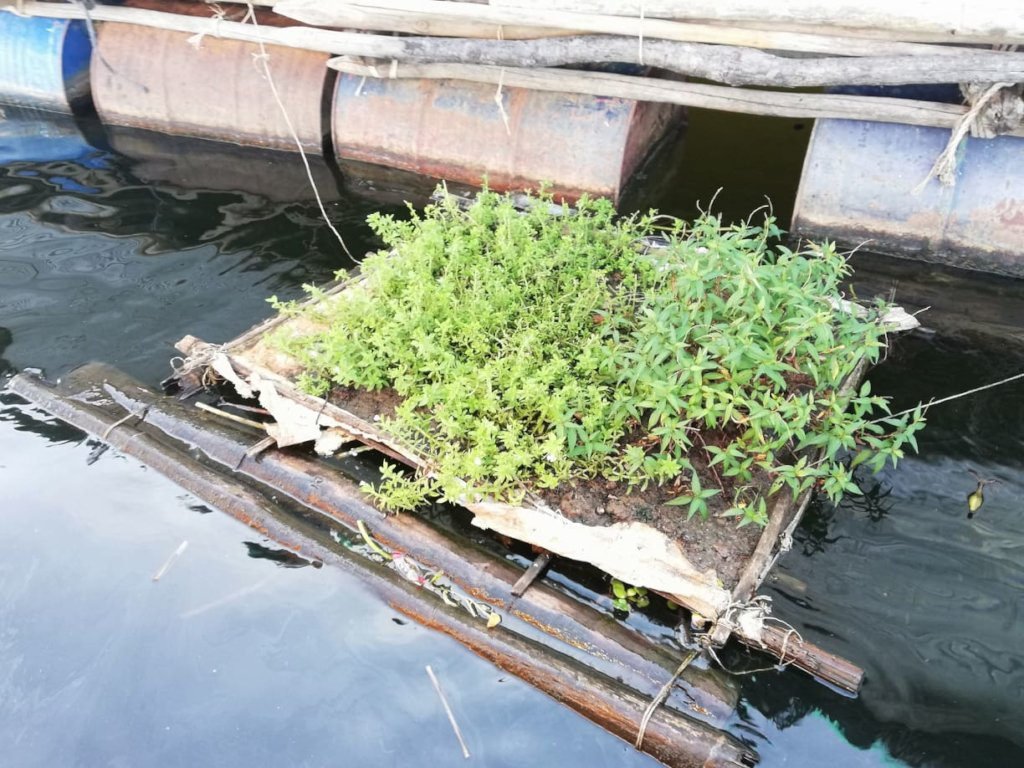 A small floating garden for home based nutrition.