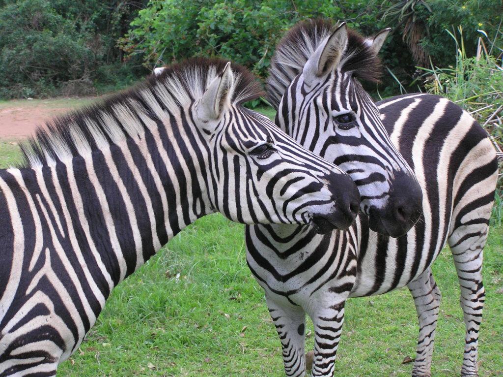 Stripy & Tammy coming to greet us