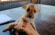 Puppy Flood in Public Shelter Bucov